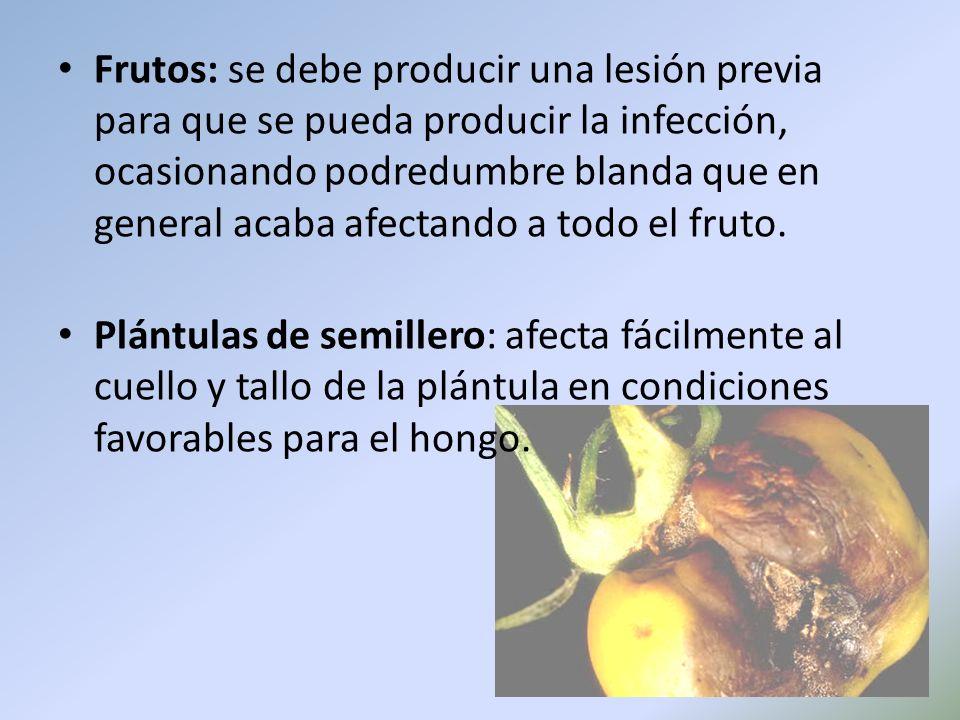 Frutos: se debe producir una lesión previa para que se pueda producir la infección, ocasionando podredumbre blanda que en general acaba afectando a todo el fruto.