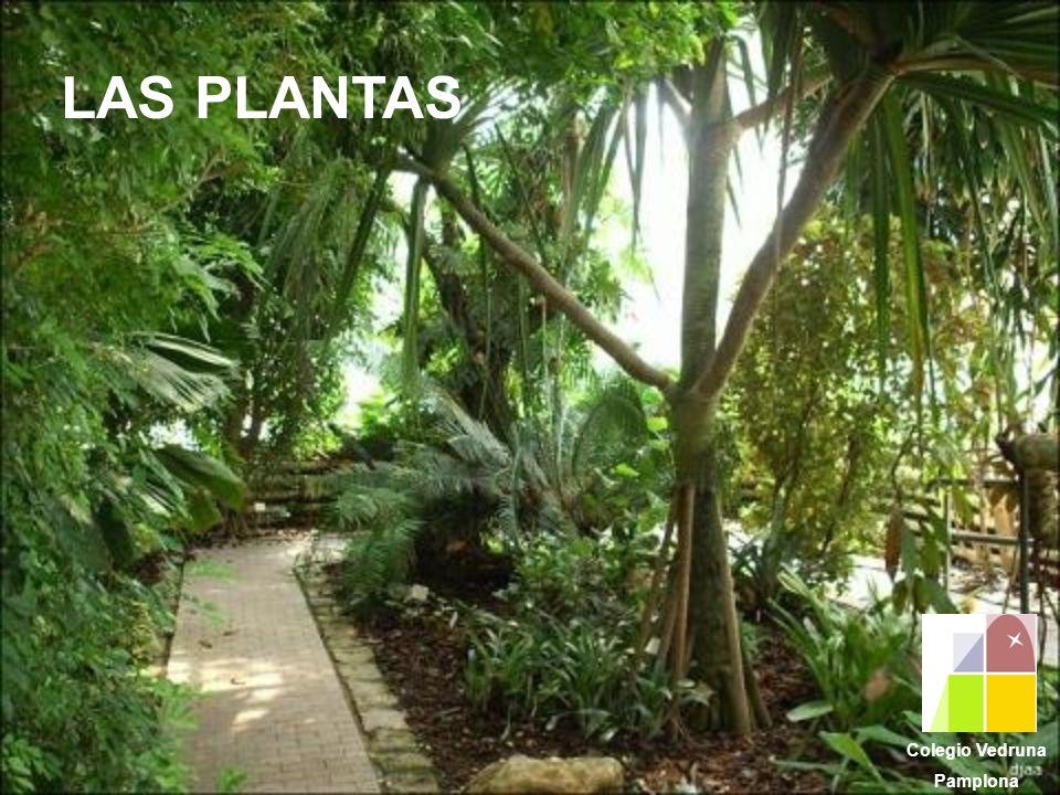 LAS PLANTAS Colegio Vedruna Pamplona