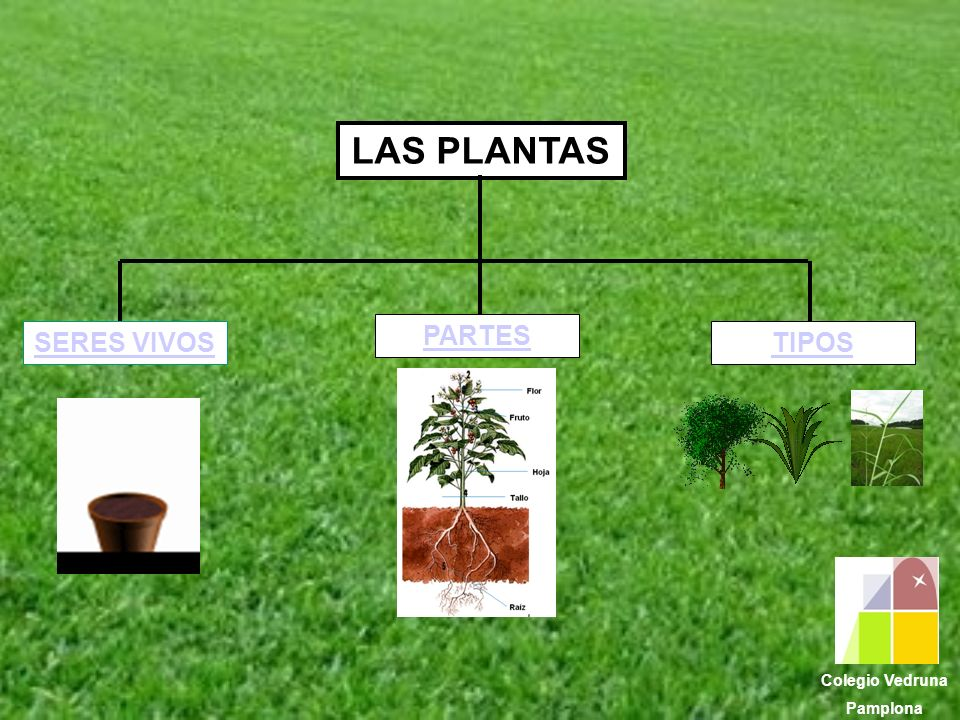 LAS PLANTAS PARTES SERES VIVOS TIPOS Colegio Vedruna Pamplona