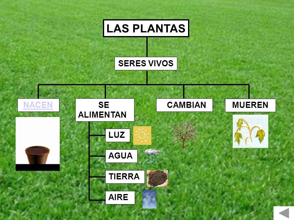 LAS PLANTAS SERES VIVOS NACEN SE ALIMENTAN CAMBIAN MUEREN LUZ AGUA