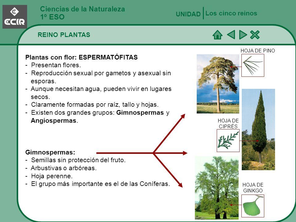 1º ESO Ciencias de la Naturaleza Los cinco reinos UNIDAD REINO PLANTAS
