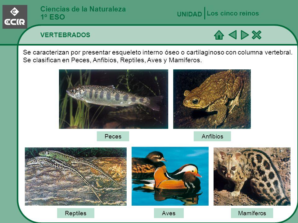 1º ESO Ciencias de la Naturaleza Los cinco reinos UNIDAD VERTEBRADOS