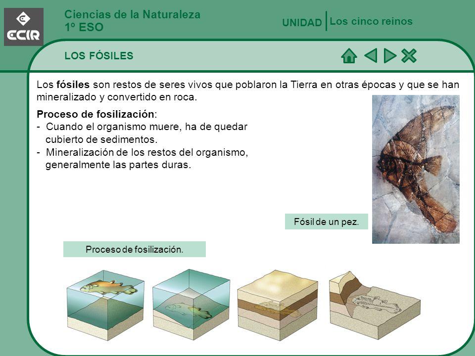 Proceso de fosilización.