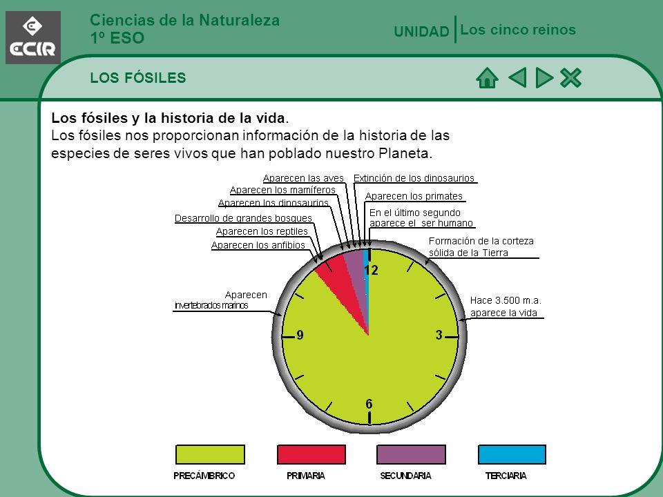 1º ESO Ciencias de la Naturaleza Los cinco reinos UNIDAD LOS FÓSILES