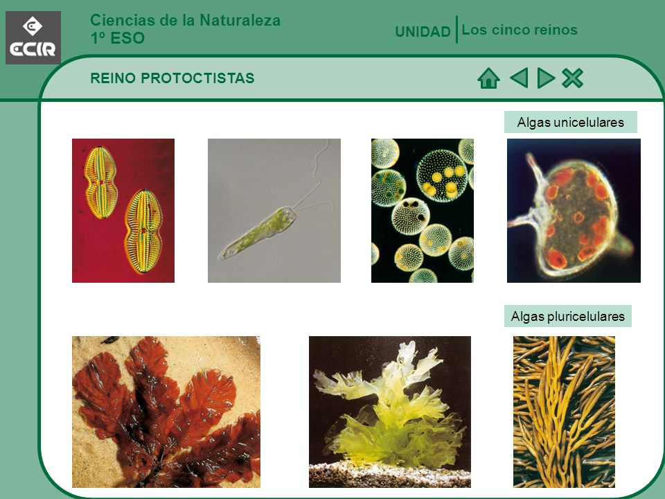 1º ESO Ciencias de la Naturaleza Los cinco reinos UNIDAD