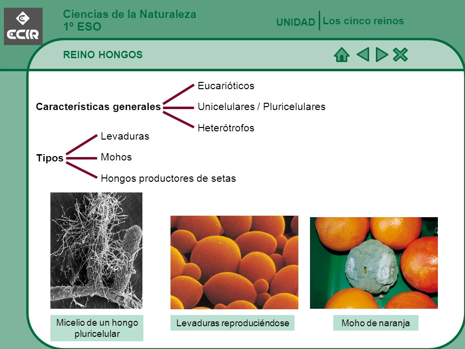1º ESO Ciencias de la Naturaleza Los cinco reinos UNIDAD REINO HONGOS
