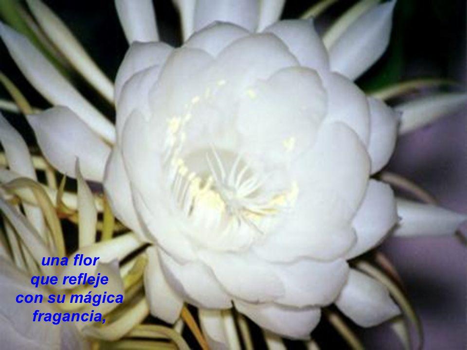 una flor que refleje con su mágica fragancia,