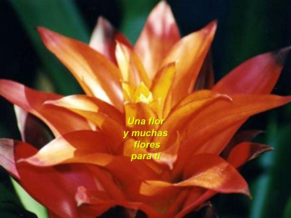 Una flor y muchas flores para tí