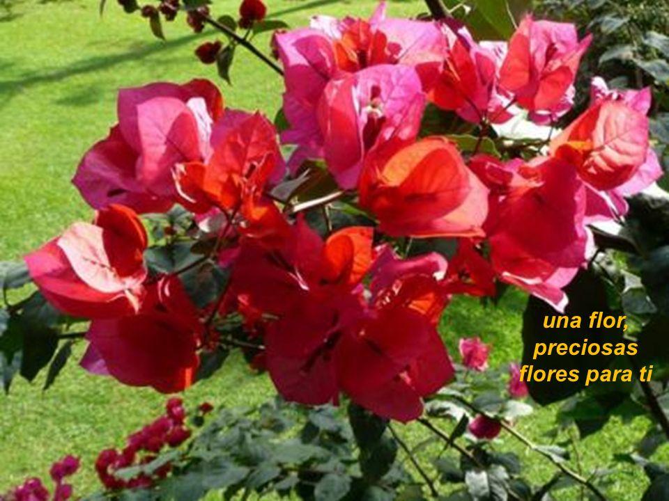 una flor, preciosas flores para ti