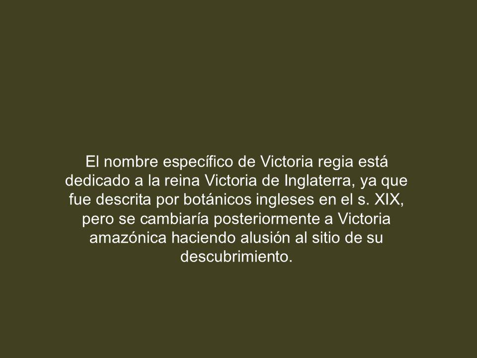 El nombre específico de Victoria regia está dedicado a la reina Victoria de Inglaterra, ya que fue descrita por botánicos ingleses en el s.