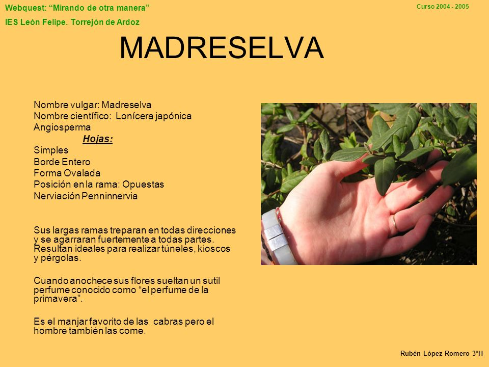 MADRESELVA Nombre vulgar: Madreselva