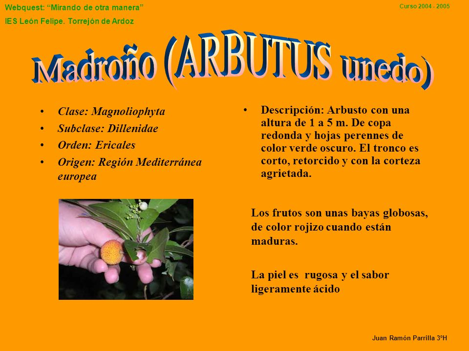 Madroño (ARBUTUS unedo)