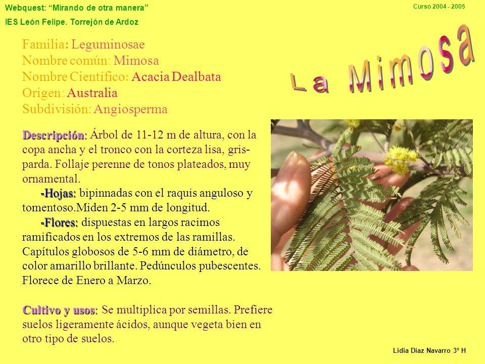La Mimosa Familia: Leguminosae Nombre común: Mimosa