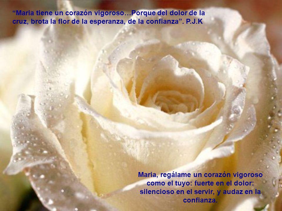 Maria tiene un corazón vigoroso…Porque del dolor de la cruz, brota la flor de la esperanza, de la confianza . P.J.K