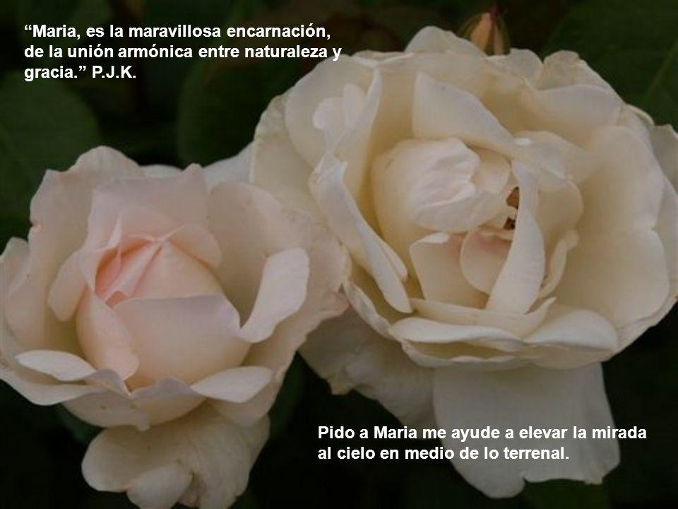 Maria, es la maravillosa encarnación, de la unión armónica entre naturaleza y gracia. P.J.K.