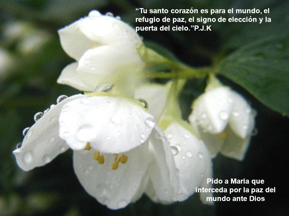 Pido a Maria que interceda por la paz del mundo ante Dios