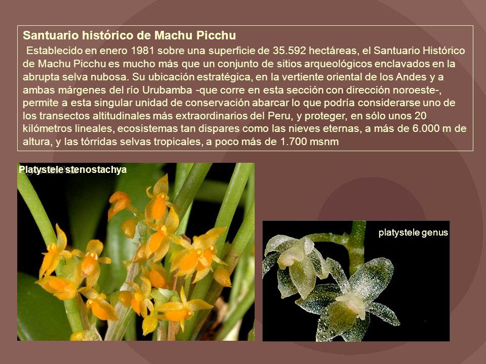 Santuario histórico de Machu Picchu Establecido en enero 1981 sobre una superficie de 35.592 hectáreas, el Santuario Histórico de Machu Picchu es mucho más que un conjunto de sitios arqueológicos enclavados en la abrupta selva nubosa. Su ubicación estratégica, en la vertiente oriental de los Andes y a ambas márgenes del río Urubamba -que corre en esta sección con dirección noroeste-, permite a esta singular unidad de conservación abarcar lo que podría considerarse uno de los transectos altitudinales más extraordinarios del Peru, y proteger, en sólo unos 20 kilómetros lineales, ecosistemas tan dispares como las nieves eternas, a más de 6.000 m de altura, y las tórridas selvas tropicales, a poco más de 1.700 msnm