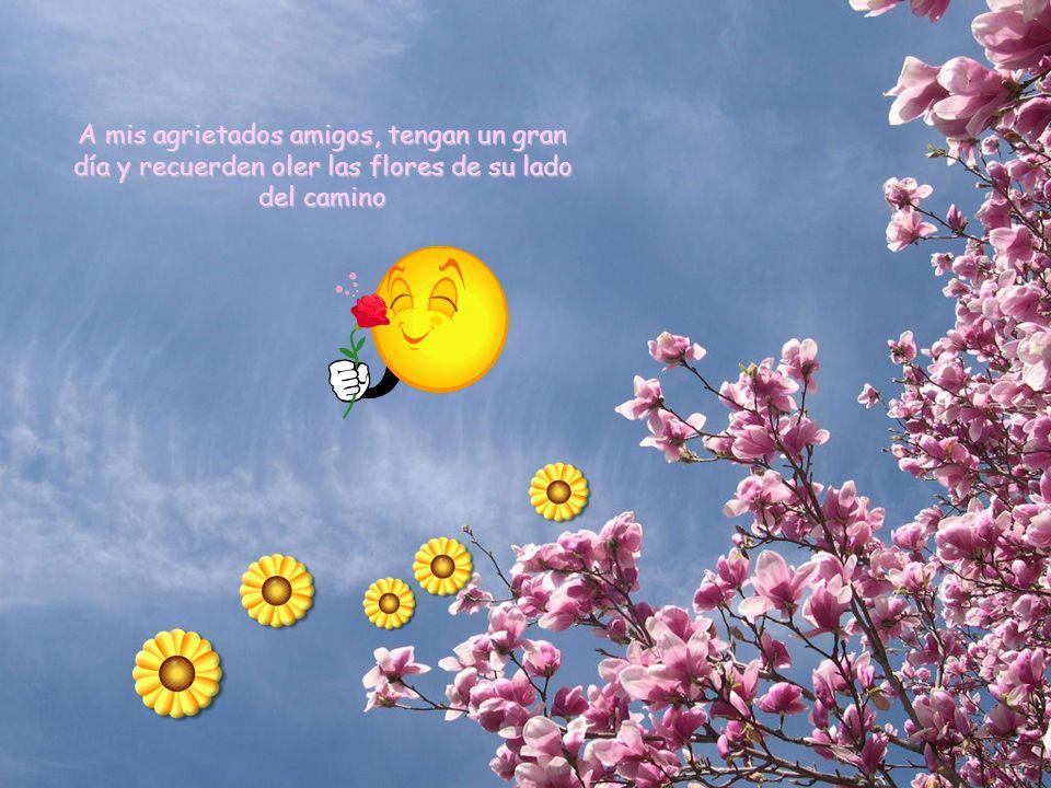 A mis agrietados amigos, tengan un gran día y recuerden oler las flores de su lado del camino