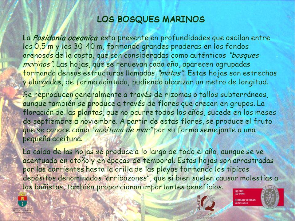 LOS BOSQUES MARINOS
