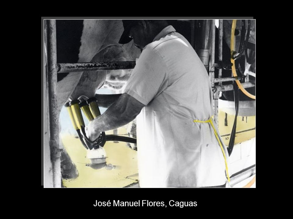 José Manuel Flores, Caguas