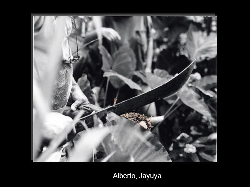 Alberto, Jayuya