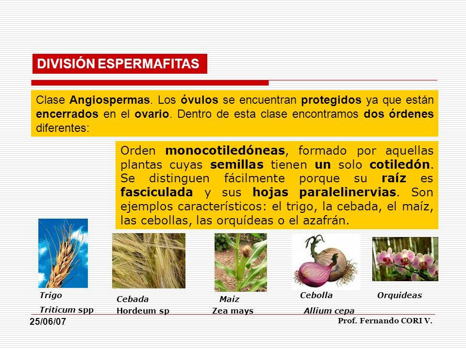 DIVISIÓN ESPERMAFITAS