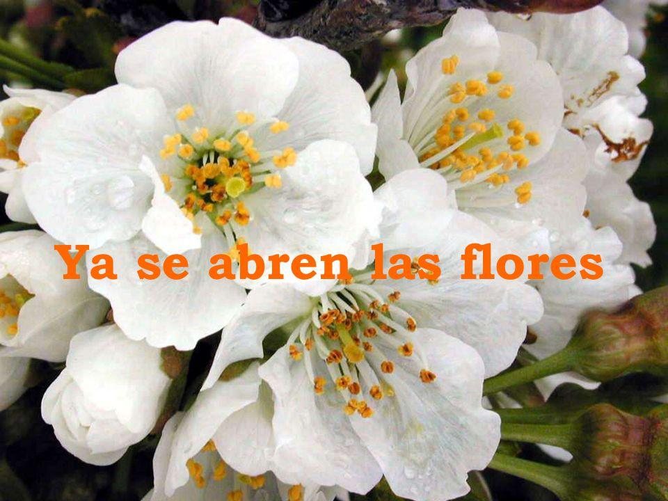 Ya se abren las flores