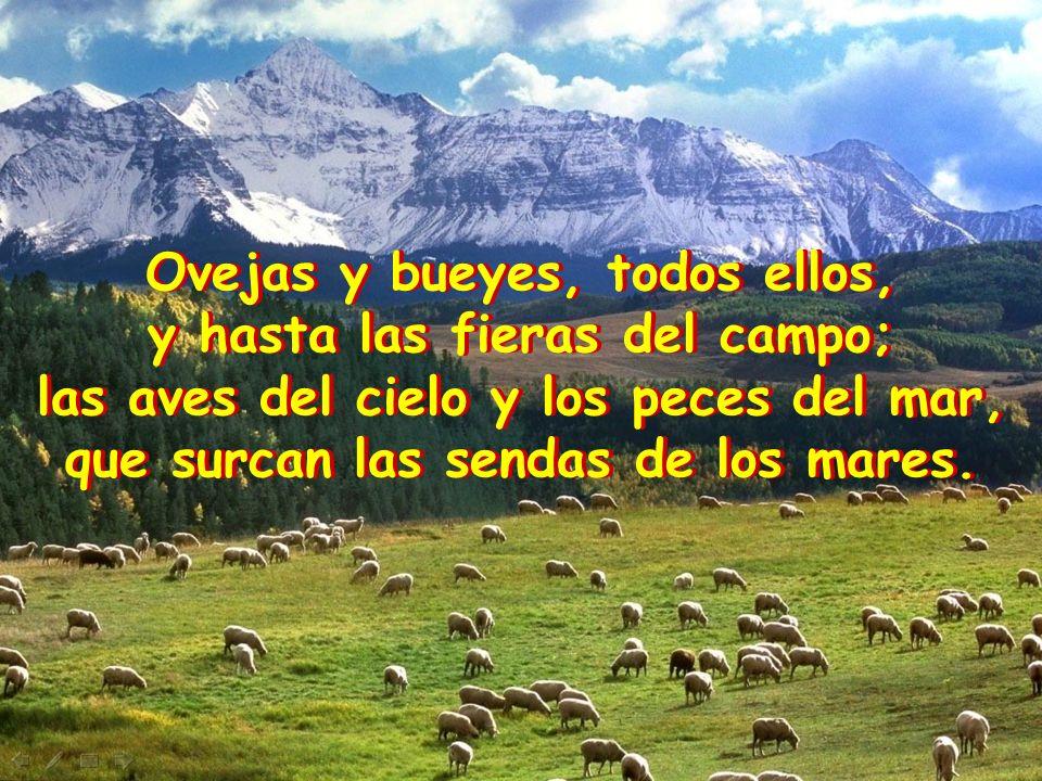 Ovejas y bueyes, todos ellos, y hasta las fieras del campo;