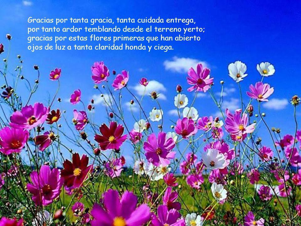 Gracias por tanta gracia, tanta cuidada entrega, por tanto ardor temblando desde el terreno yerto; gracias por estas flores primeras que han abierto ojos de luz a tanta claridad honda y ciega.