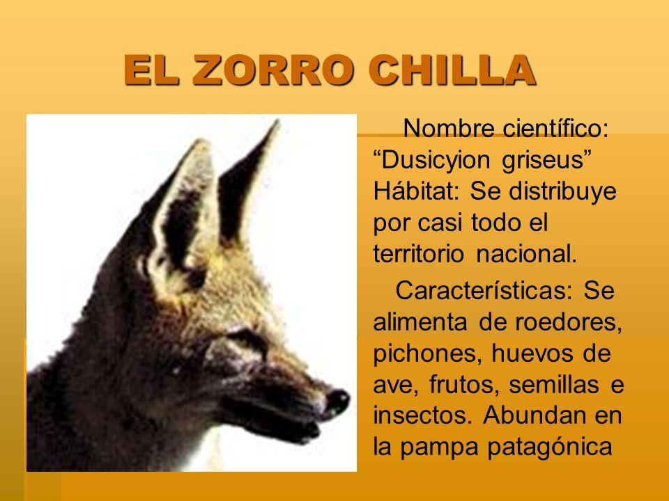 EL ZORRO CHILLA Nombre científico: Dusicyion griseus Hábitat: Se distribuye por casi todo el territorio nacional.