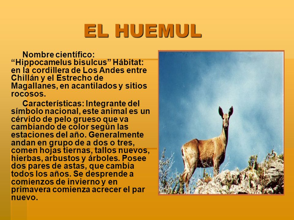 EL HUEMUL