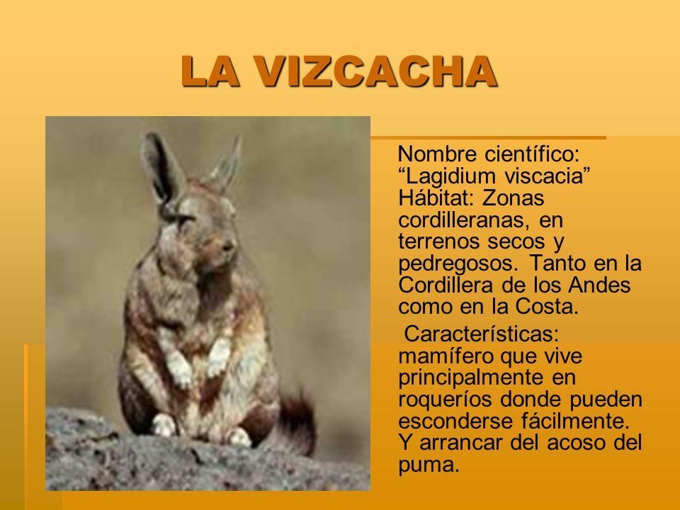 LA VIZCACHA