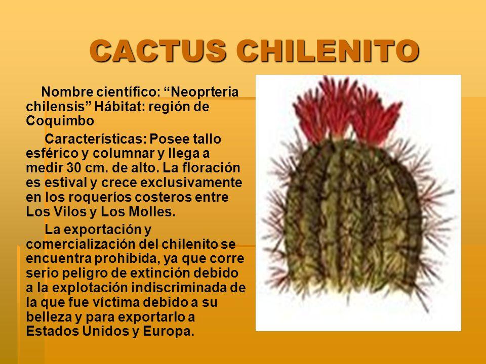 CACTUS CHILENITO Nombre científico: Neoprteria chilensis Hábitat: región de Coquimbo.