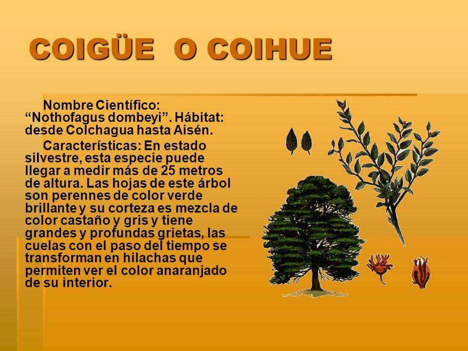 COIGÜE O COIHUE Nombre Científico: Nothofagus dombeyi . Hábitat: desde Colchagua hasta Aisén.