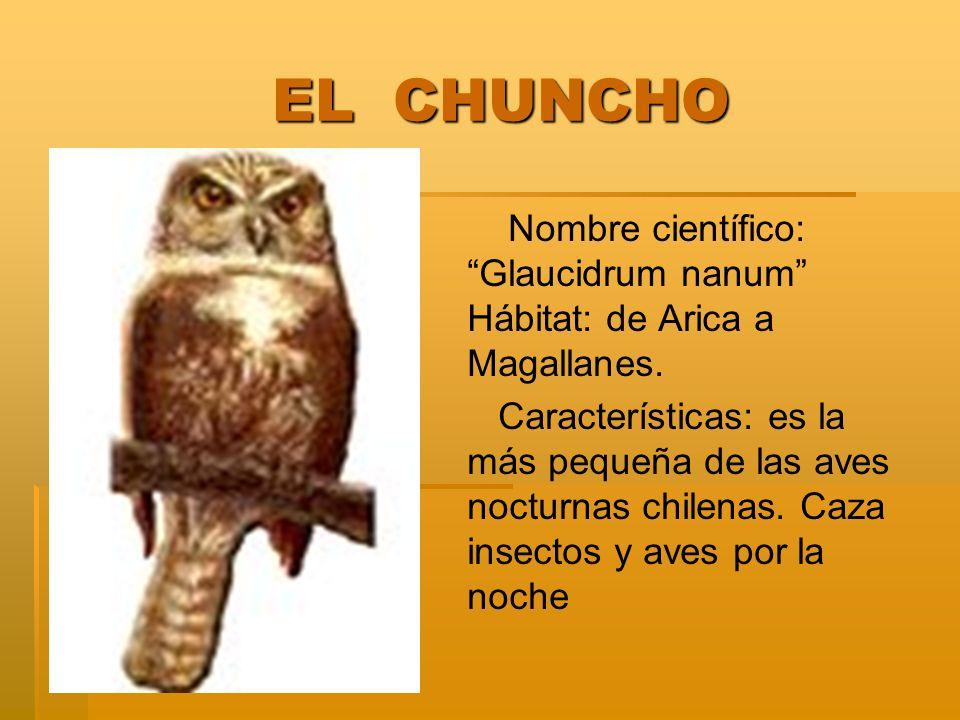 EL CHUNCHO Nombre científico: Glaucidrum nanum Hábitat: de Arica a Magallanes.