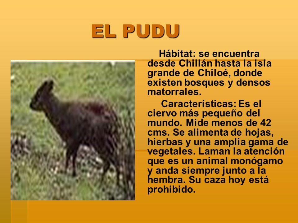 EL PUDU Hábitat: se encuentra desde Chillán hasta la isla grande de Chiloé, donde existen bosques y densos matorrales.
