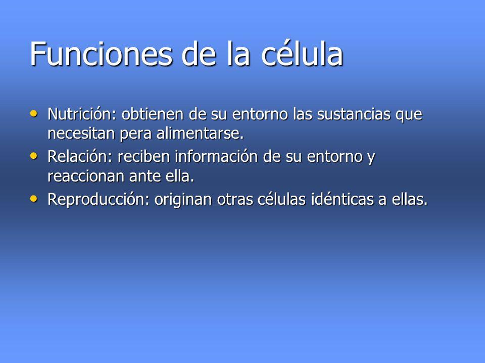 Funciones de la célula Nutrición: obtienen de su entorno las sustancias que necesitan pera alimentarse.