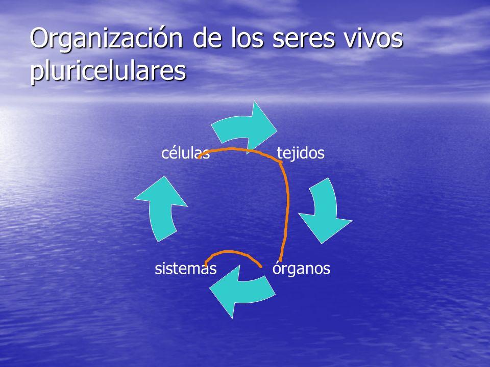 Organización de los seres vivos pluricelulares