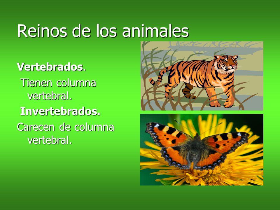 Reinos de los animales Vertebrados. Tienen columna vertebral.
