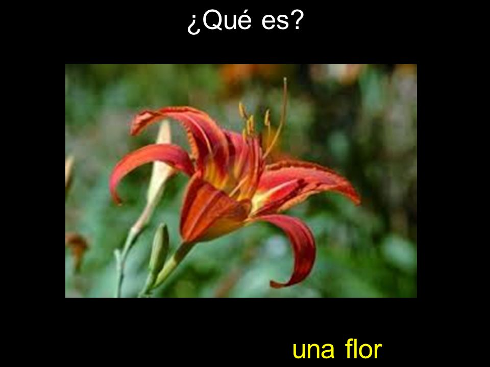 ¿Qué es una flor