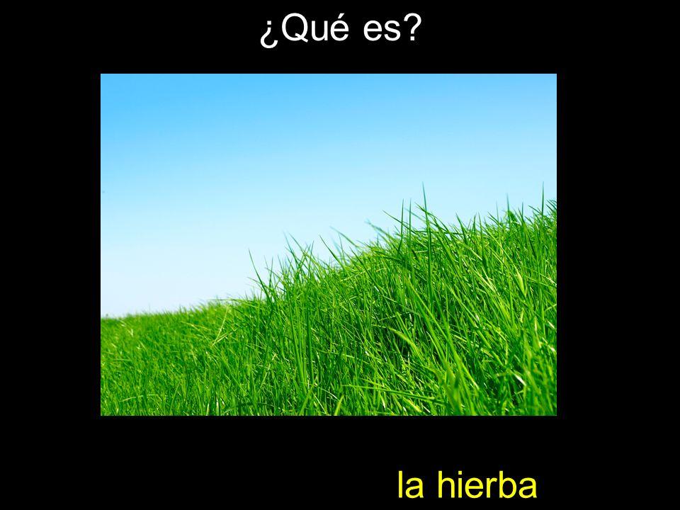 ¿Qué es la hierba