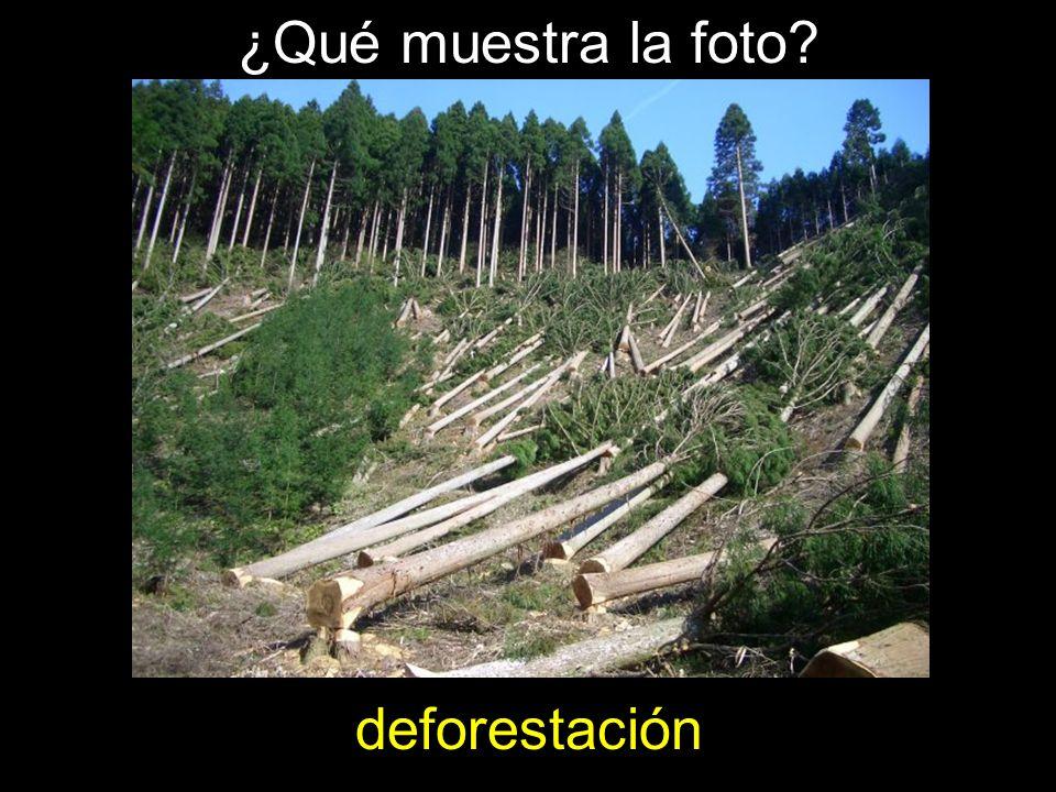 ¿Qué muestra la foto deforestación