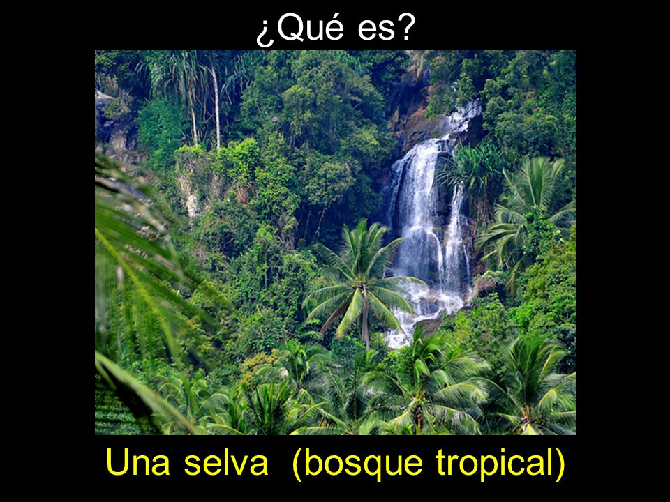 Una selva (bosque tropical)