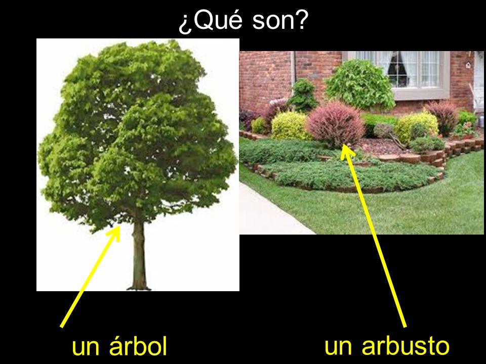 ¿Qué son un árbol un arbusto