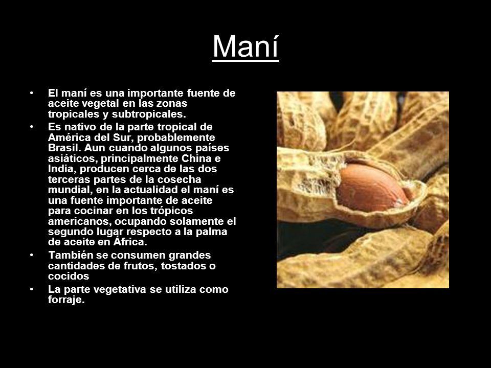 Maní El maní es una importante fuente de aceite vegetal en las zonas tropicales y subtropicales.