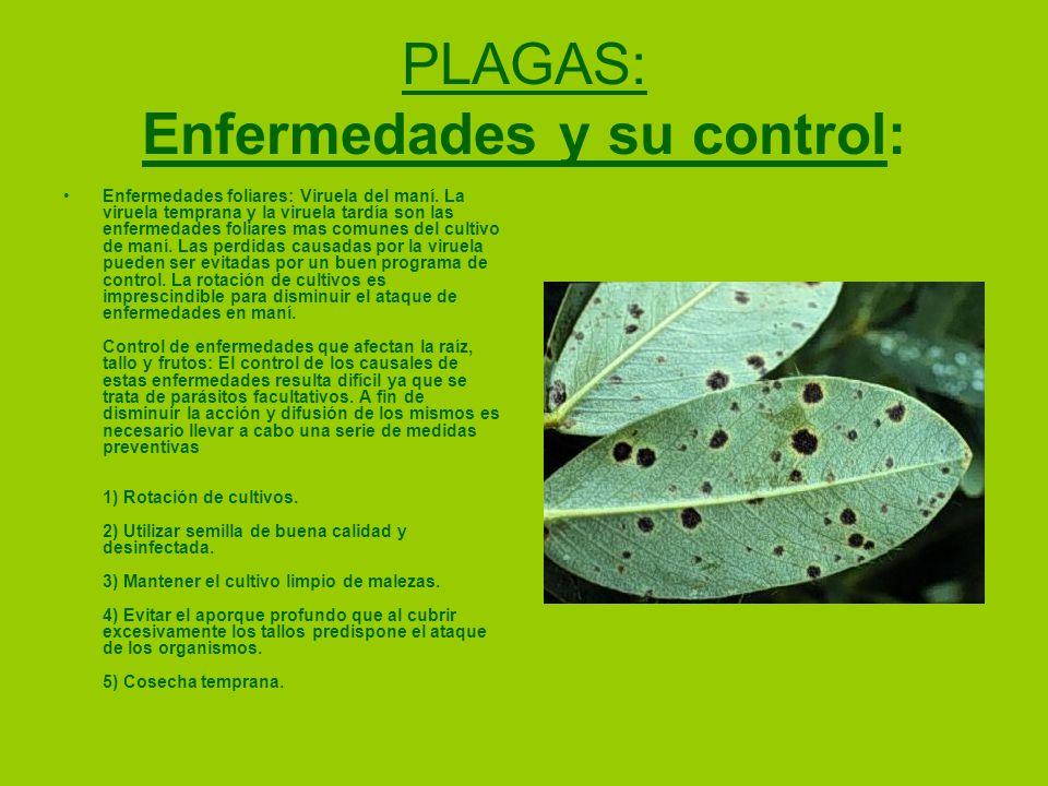 PLAGAS: Enfermedades y su control: