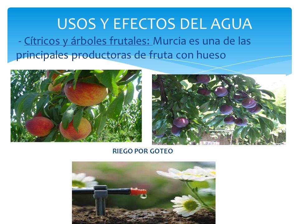 USOS Y EFECTOS DEL AGUA - Cítricos y árboles frutales: Murcia es una de las principales productoras de fruta con hueso.