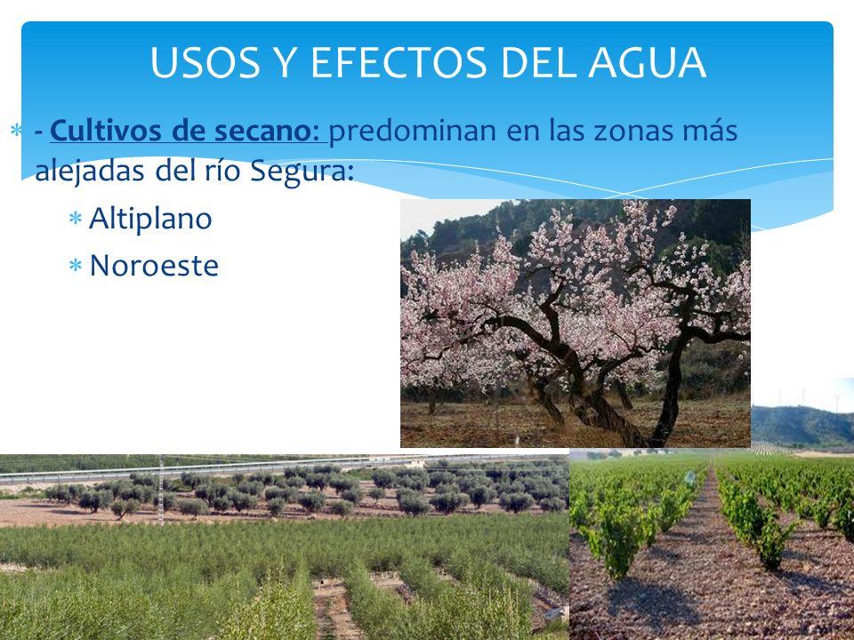 USOS Y EFECTOS DEL AGUA - Cultivos de secano: predominan en las zonas más alejadas del río Segura: Altiplano.
