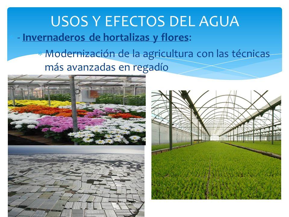 USOS Y EFECTOS DEL AGUA - Invernaderos de hortalizas y flores: