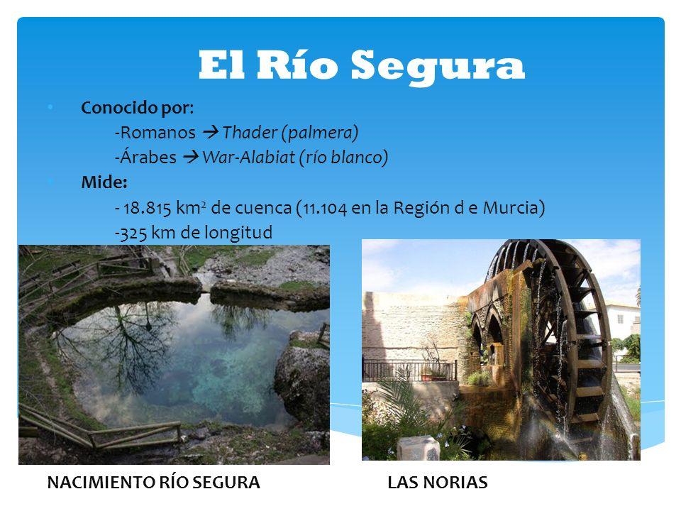 El Río Segura Conocido por: -Romanos  Thader (palmera)